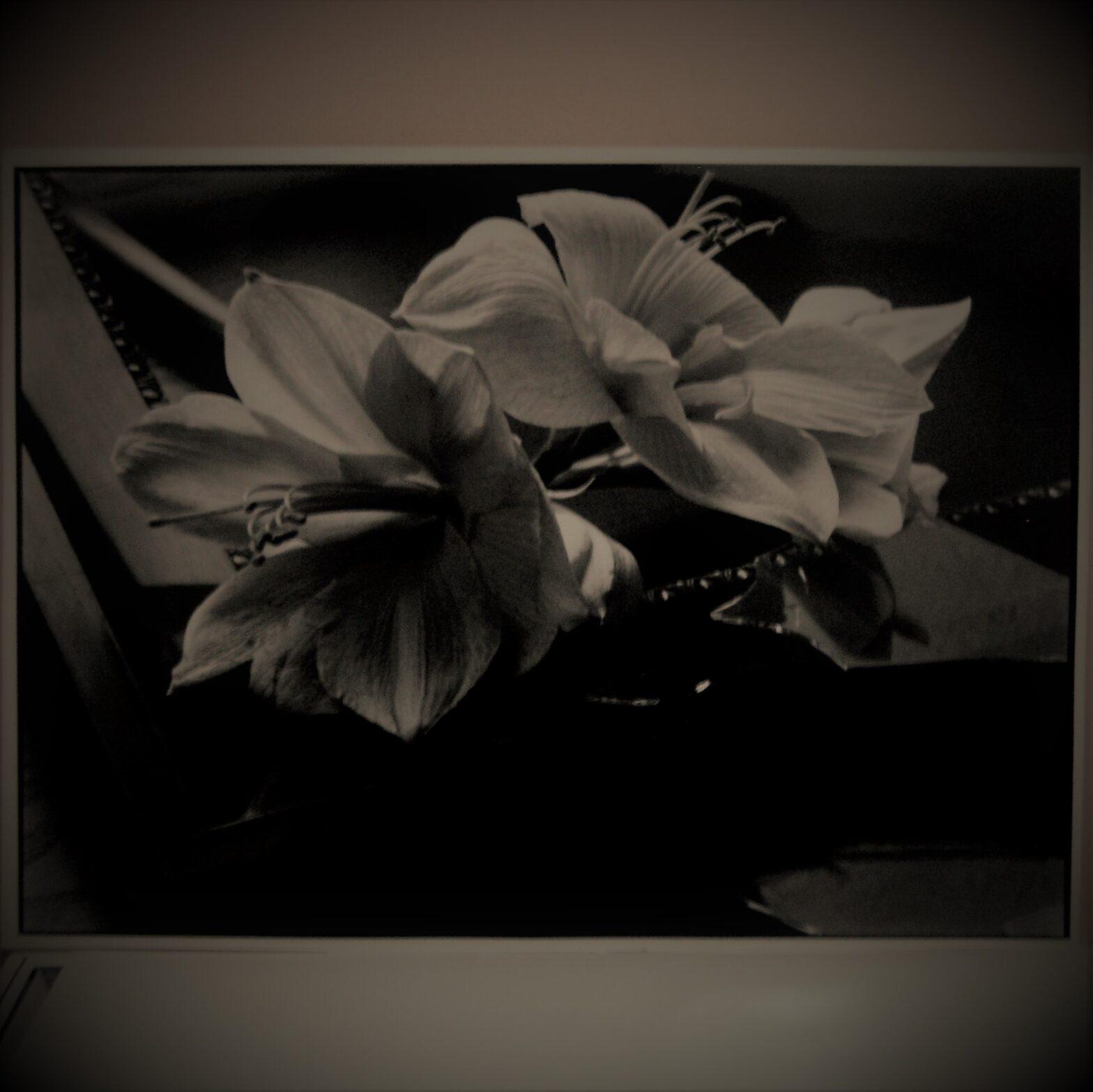 Stillife Black and white photography