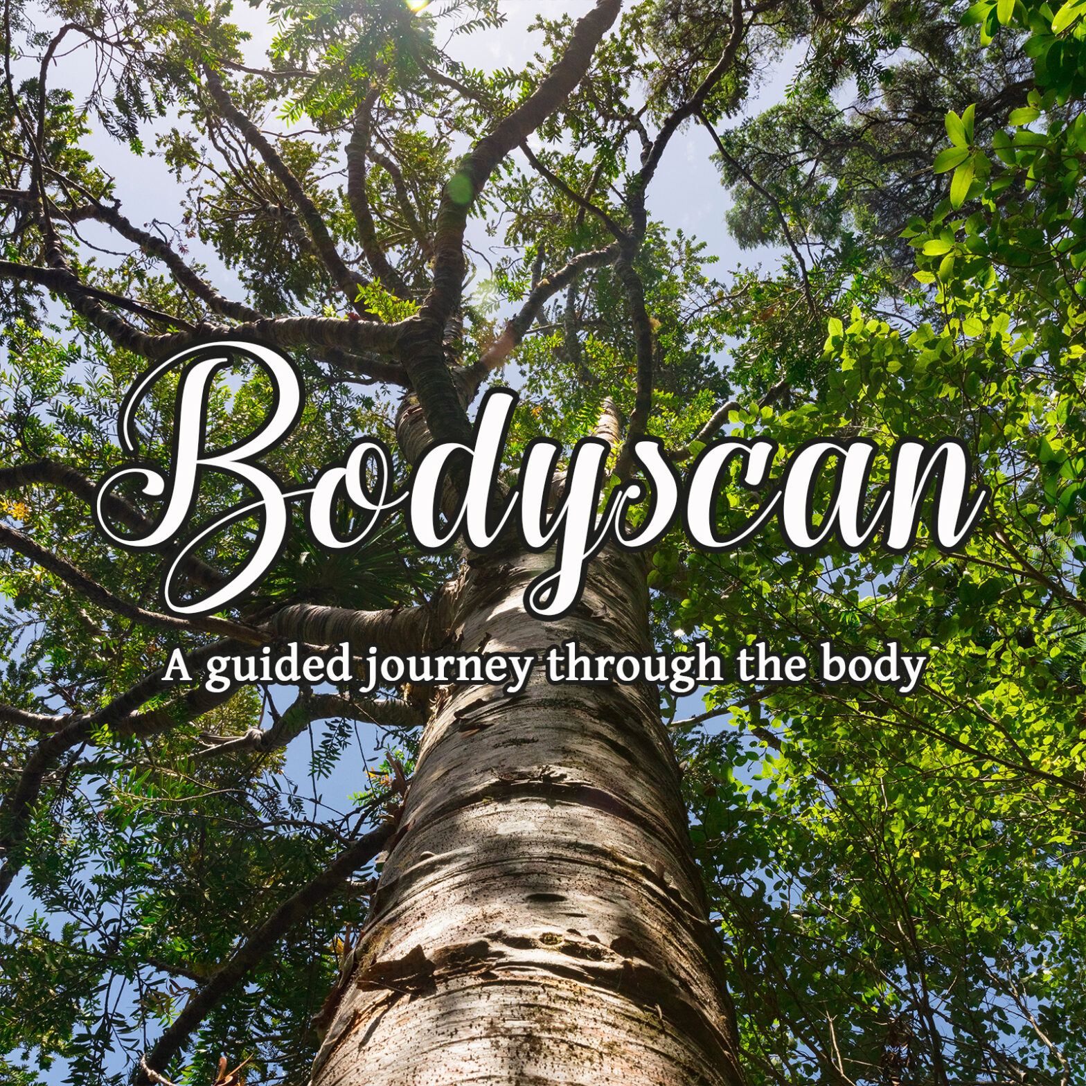 15min Bodyscan - a guided journey through the body - MBSR guided meditation -