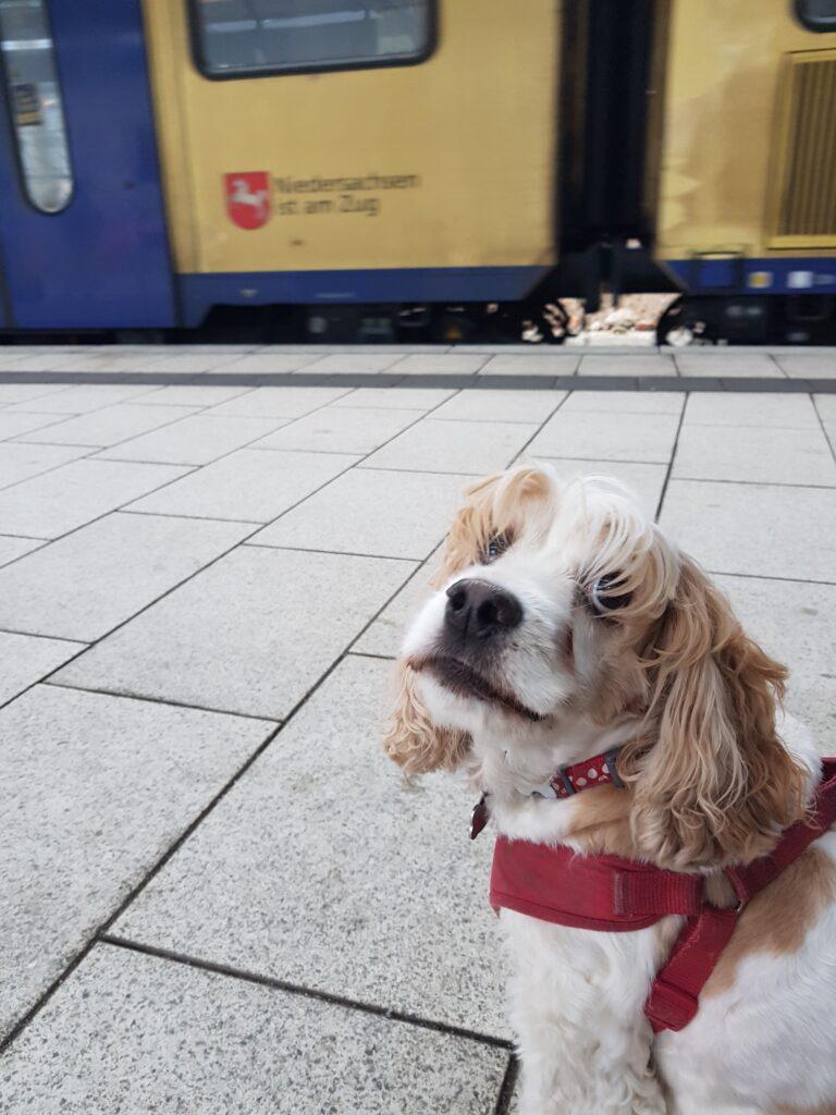 Hund am Bahnsteig
